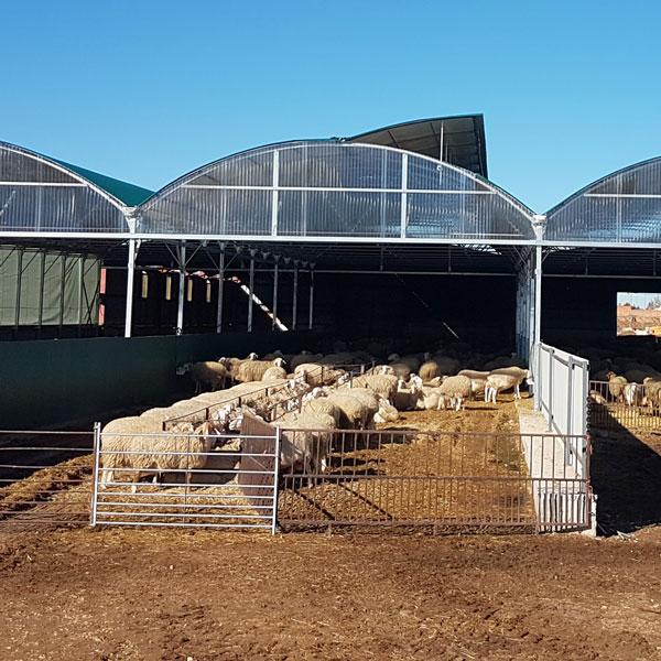 Máxima rentabilidad para instalación ovejas